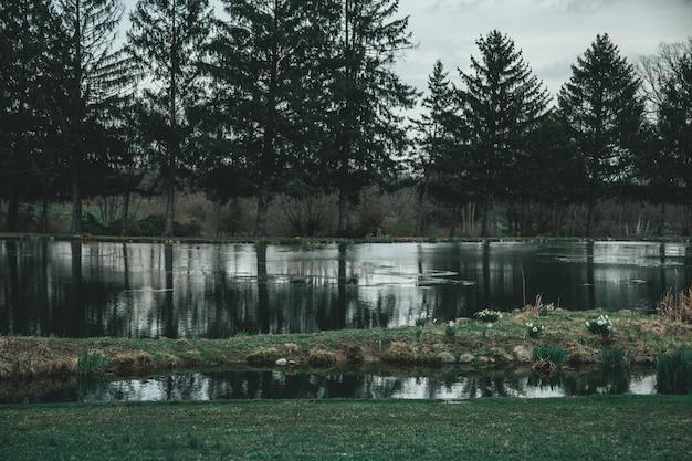 Grande plano lindo de um lago cercado por árvores