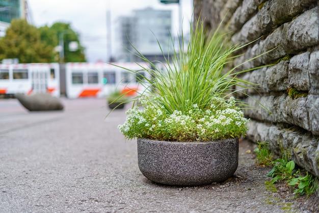 Grande pote de pedra com flores e bonde em segundo plano na cidade.