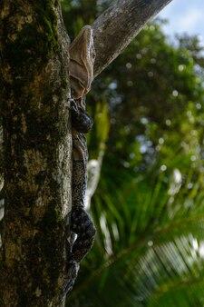 Grande réptil em um tronco
