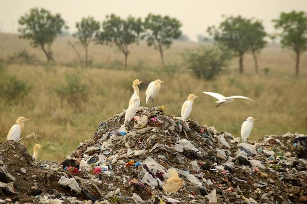 Grande terra de lixo. poluição da terra e do ar.