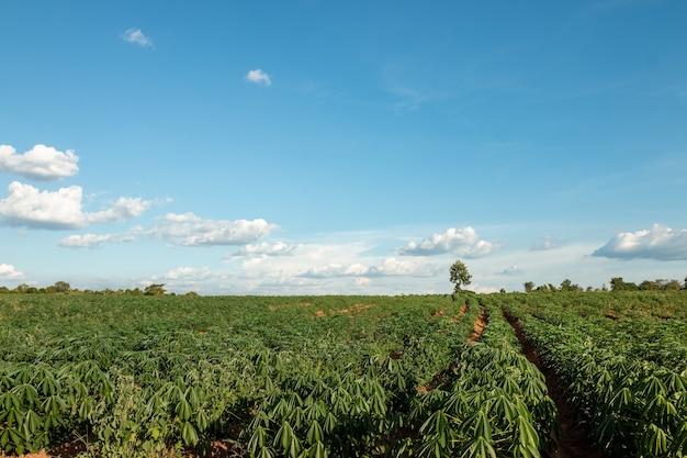 Grande terreno agrícola em céu azul e nuvens