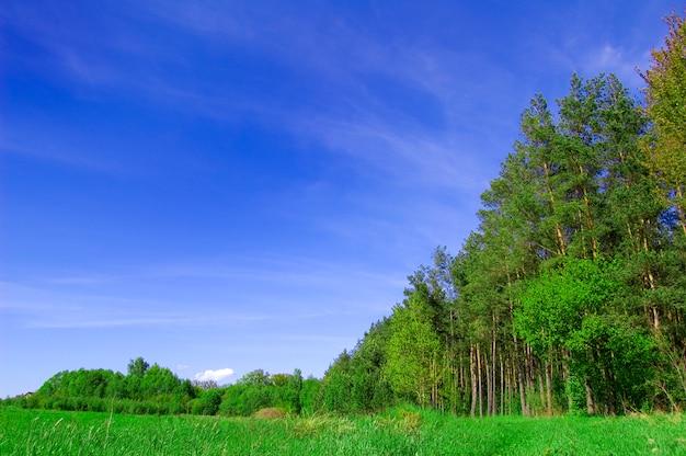 Grandes árvores em um campo