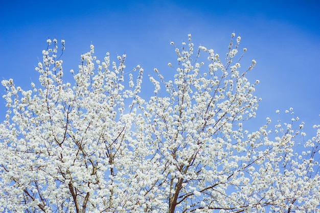 Grandes árvores florescendo