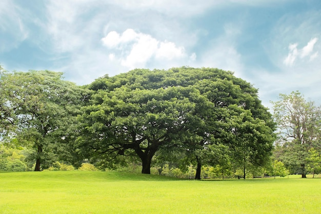 Grandes árvores no jardim