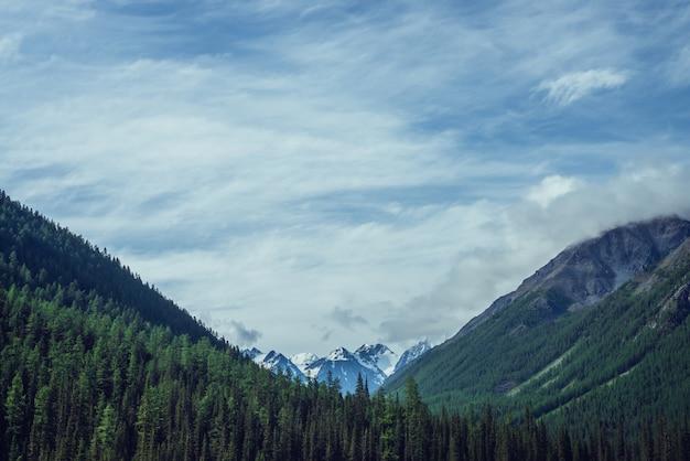 Grandes belas montanhas nevadas atrás da floresta de coníferas