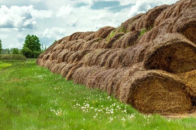 Grandes fardos de feno são empilhados em grandes pilhas no campo