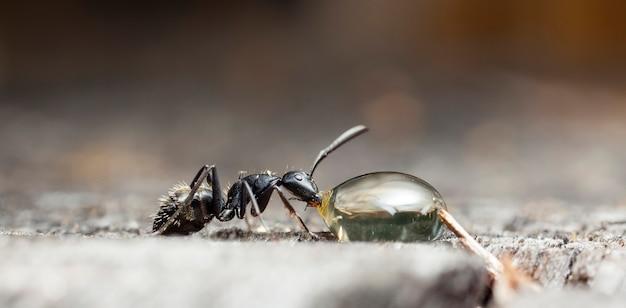 Grandes formigas da floresta em um habitat nativo