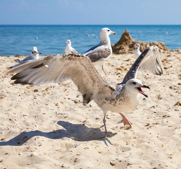 Grandes gaivotas brancas na costa arenosa do mar negro em um dia de verão