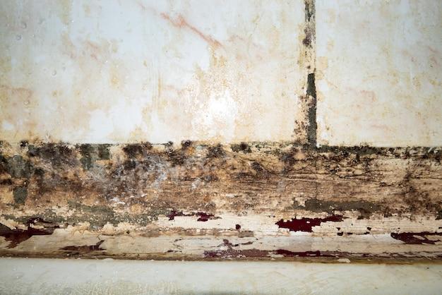 Grandes manchas úmidas, rachaduras e mofo preto na parede perto da farinha no quarto de uma casa após chuva forte e muita água.