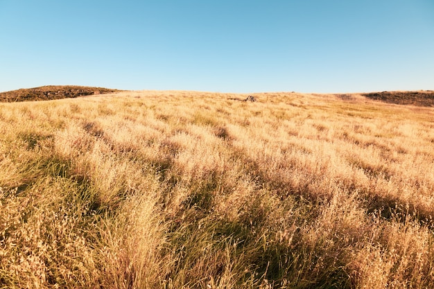 Grandes pastagens secas e o céu claro sobre elas - perfeitas para o fundo