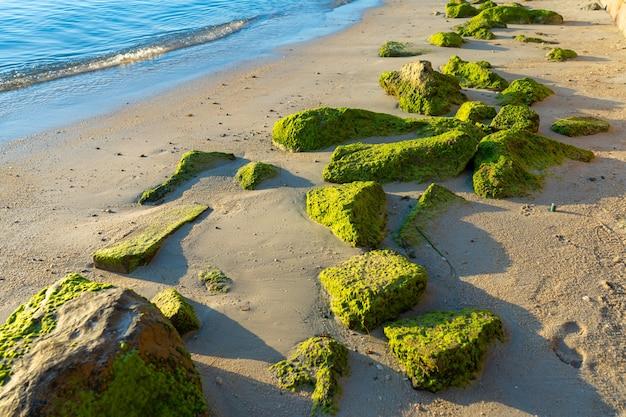 Grandes pedras cobertas de algas verdes em uma praia arenosa perto do oceano. a natureza dos trópicos.