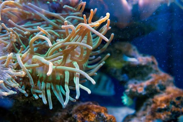 Grandes peixes do mundo subaquático em aquário