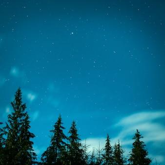 Grandes pinheiros sob um céu noturno azul com muitas estrelas