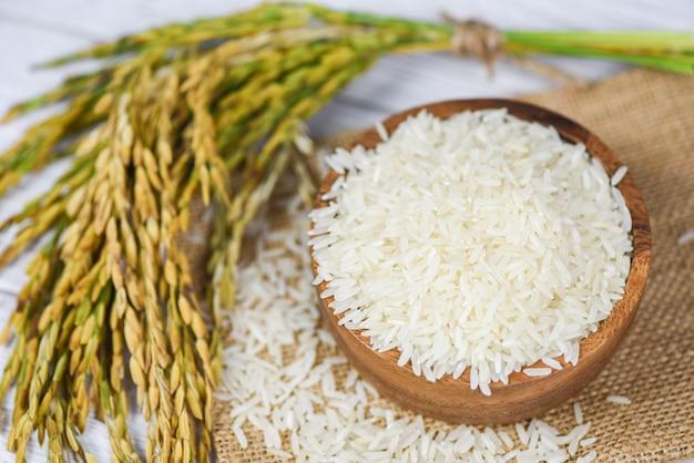 Grão de arroz de jasmim cru com orelha de produtos agrícolas de arroz para alimentos na ásia - branco de arroz tailandês na tigela e saco de fundo