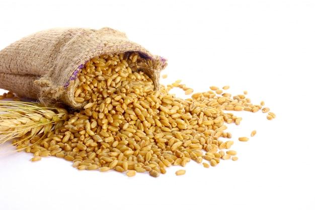 Grão de trigo em saco