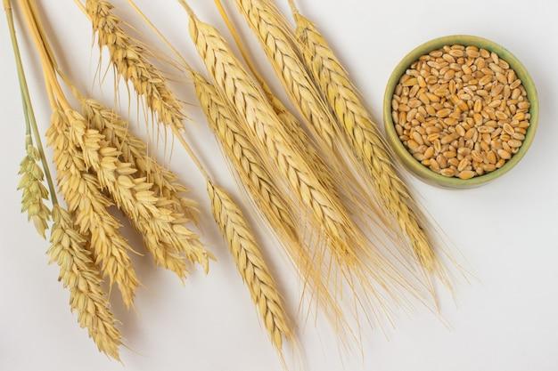 Grão de trigo em uma caixa verde, um ramo de cevada e trigo