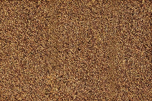 Grãos de aveia natural, closeup