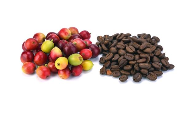 Grãos de café frescos com caule e grãos de café arábica torrados mistura forte no branco