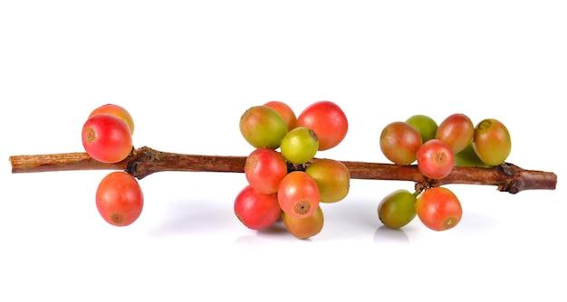 Grãos de café frescos isolados