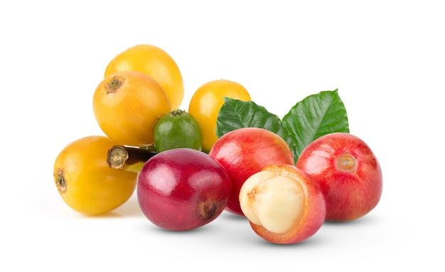 Grãos de café frutos maduros e verdes isolados no fundo branco