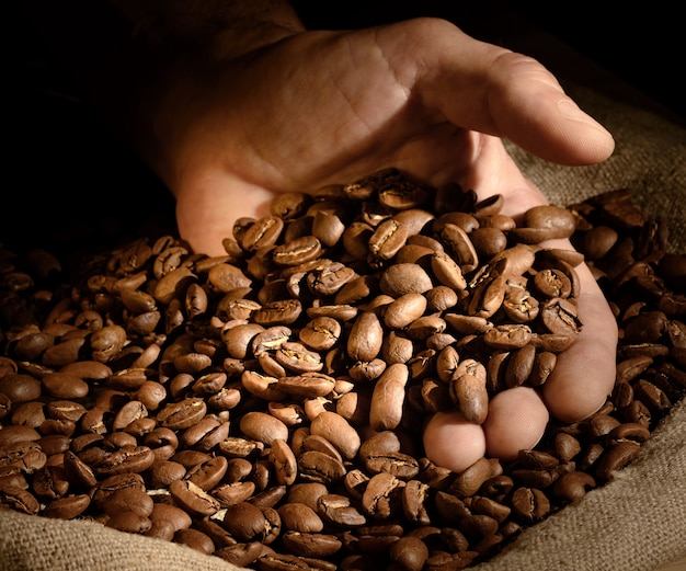 Grãos de café na mão em fundo escuro. mão pega um punhado de grãos de café do saco de estopa