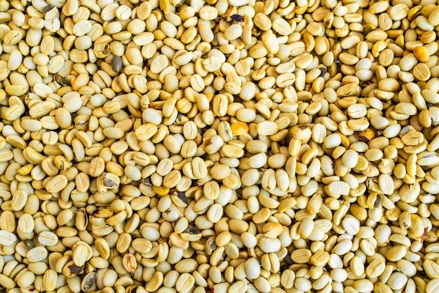 Grãos de café secos com luz solar
