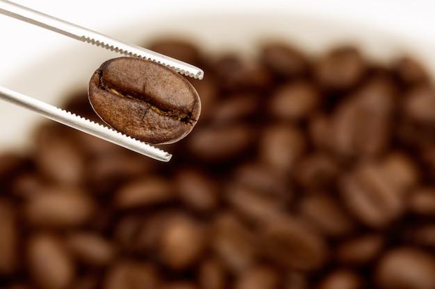 Grãos de café torrados especiais