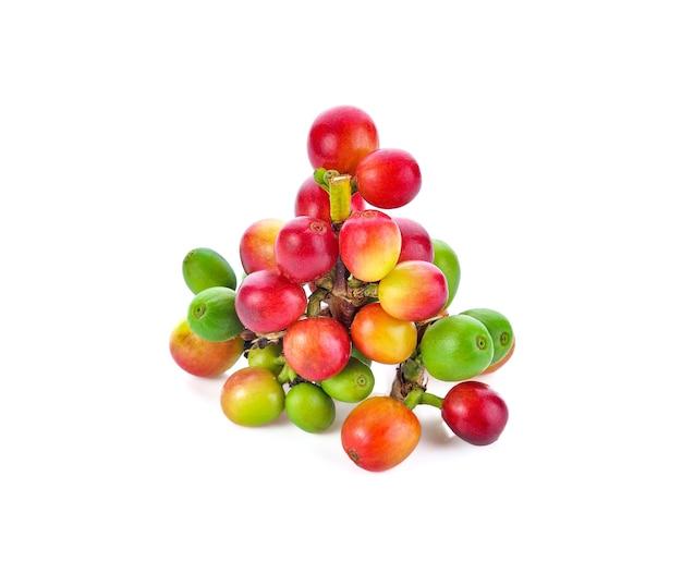 Grãos de café vermelhos, frutas maduras e verdes, isoladas no fundo branco
