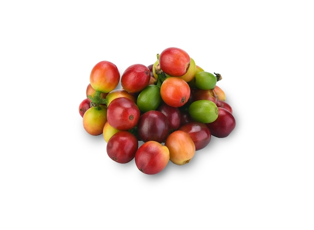 Grãos de café vermelhos, frutos maduros e verdes isolados no branco