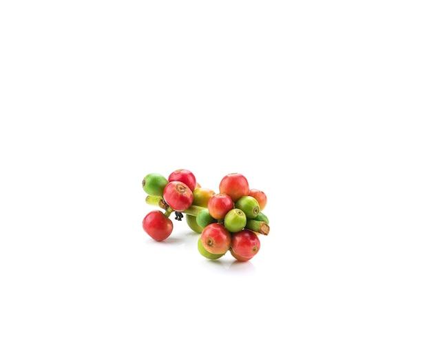 Grãos de café vermelhos, frutos maduros e verdes isolados