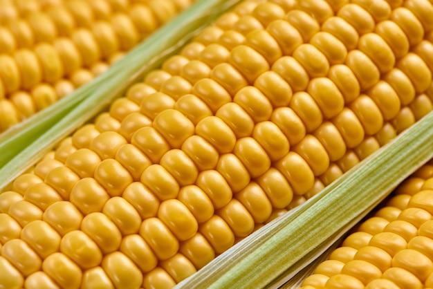 Grãos de milho maduro entre leafes verde, closeup