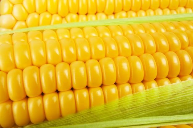 Grãos de milho maduro. fundo de espigas de milho