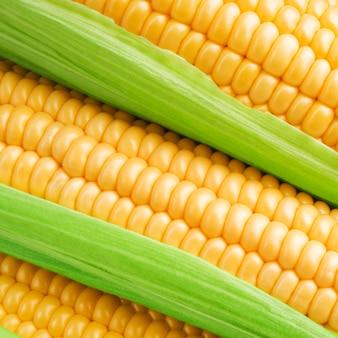 Grãos de milho maduro