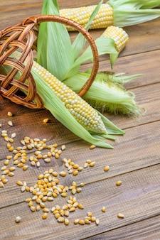 Grãos de milho na mesa. espigas de milho cru na cesta de vime. fundo de madeira. vista do topo
