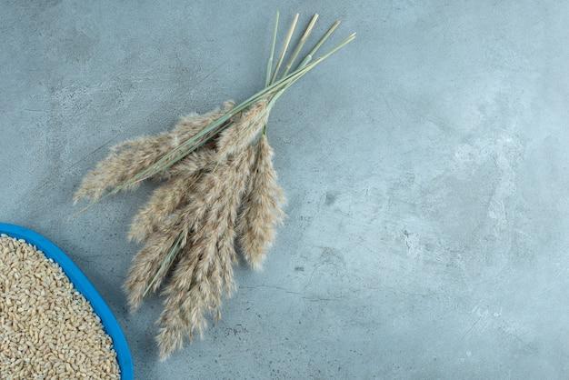 Grãos de trigo e plantas sobre fundo azul. foto de alta qualidade