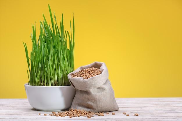 Grãos de trigo em saco de lona e brotos de trigo verde em copo branco, fundo amarelo. tiro do estúdio.