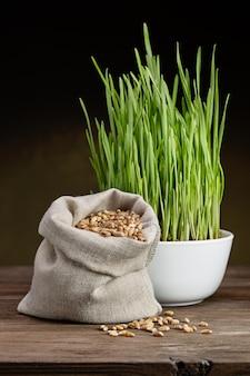 Grãos de trigo em saco de lona e brotos de trigo verde em copo branco. fundo preto. tiro do estúdio.