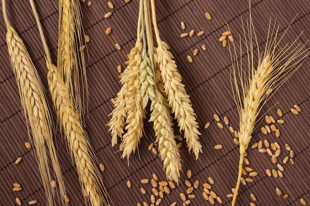 Grãos, espigas de trigo e cevada em um fundo marrom