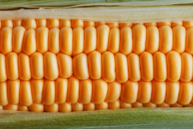Grãos maduros de milho dourado closeup