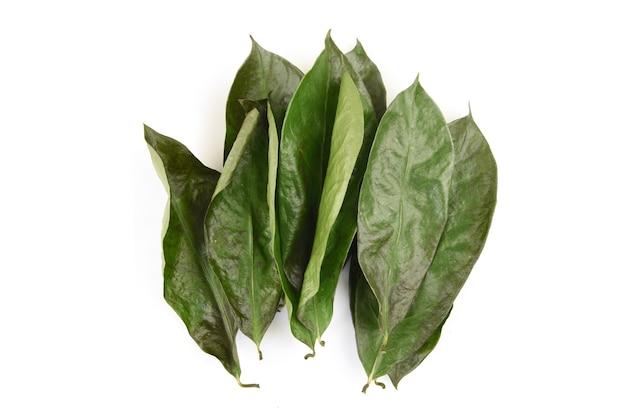 Graviola ou annona muricata secou as folhas verdes, isoladas no fundo branco.