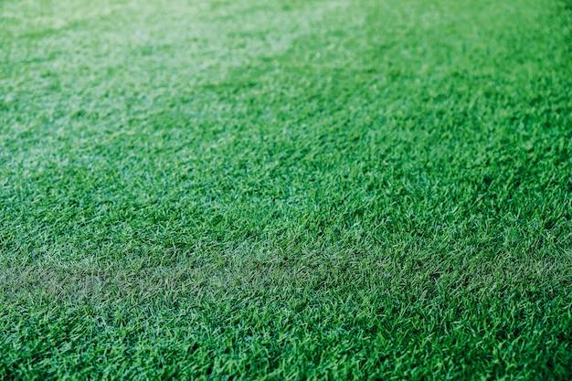Green grass texture background campo de futebol