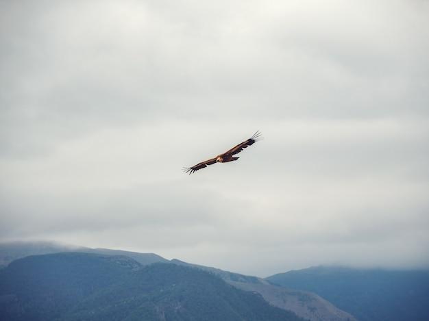 Griffon vulture gyps fulvus voando no céu sobre as montanhas.