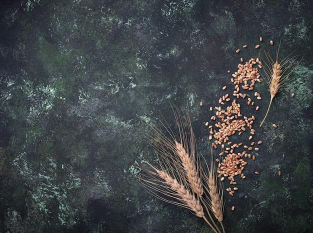 Grões e spikelets do trigo no fundo oxidado.