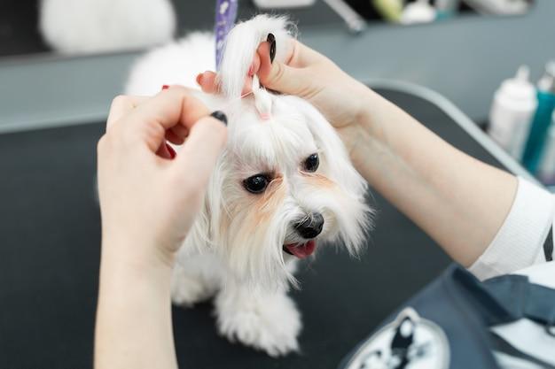 Groomer corta o cabelo de um cachorro em uma clínica veterinária