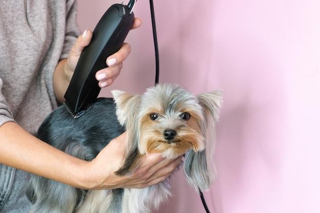 Groomer trabalhando no salão, fazendo corte de cabelo no salão de beleza.