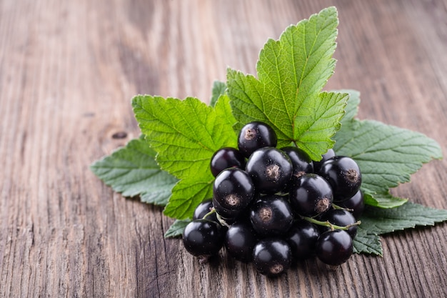 Groselha preta madura fresca com folhas originais