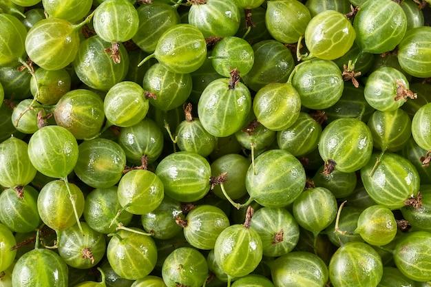 Groselha verde fresca close-up como textura de superfície