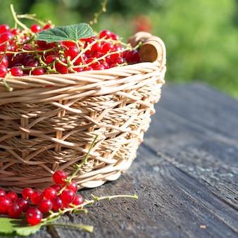 Groselhas maduras vermelhas em uma cesta de madeira