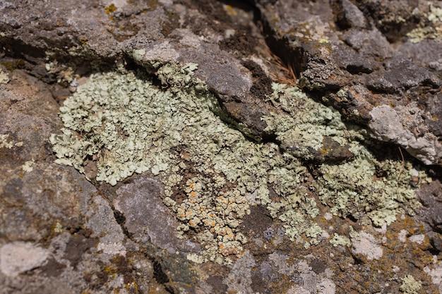 Grunge rock trabalho de fundo padrão com rachaduras e musgo entre eles. perto da textura da parede de pedra molhada.