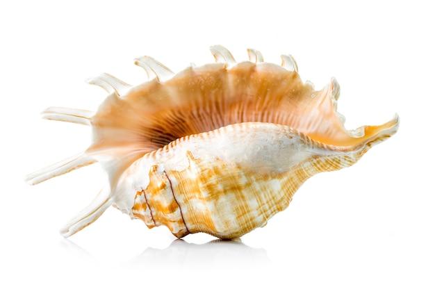 Grupo da concha do mar isolado no branco